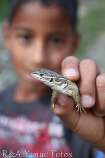 fb-lizard
