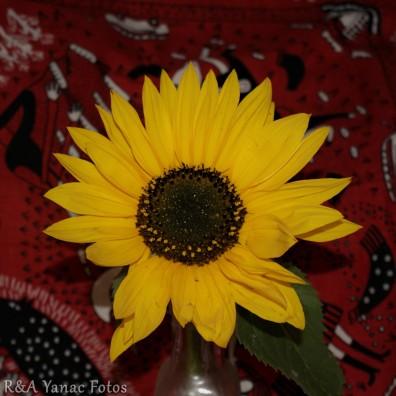 sunflower joy!
