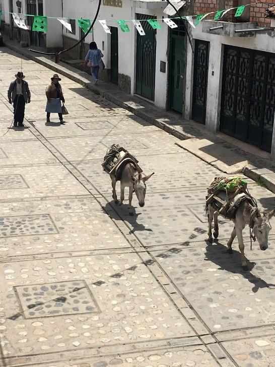 Donkeys on the street