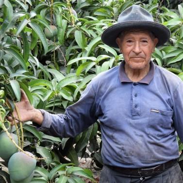 Julio Solis - Peruvian mango farmer