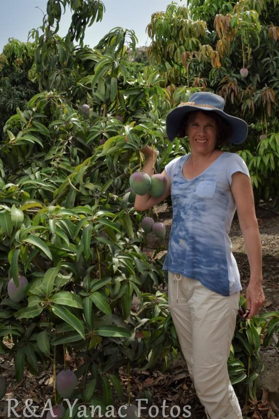 Rach in the mango grove